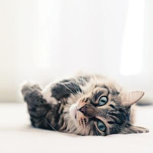 ziwi-cat-img001